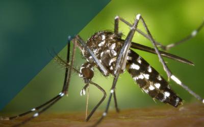 Infográfico: La malaria en Colombia