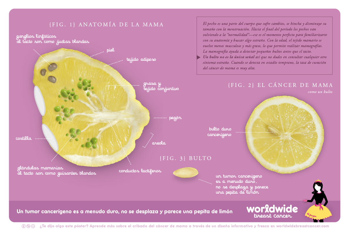 anatomia-de-la-mama-web | Integrative